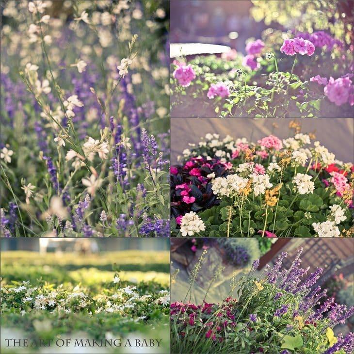My mood in Flowers