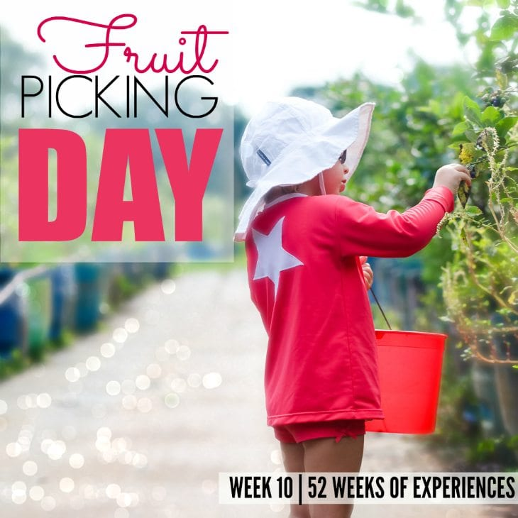 Blueberry Picking – Week 10 Of 52 Weeks Of Experiences
