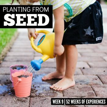 Planting From Seed – Week 9 Of 52 Weeks Of Experiences