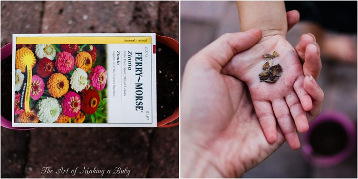Planting From Seed – Week 9 Of 52 Weeks Of Experiences