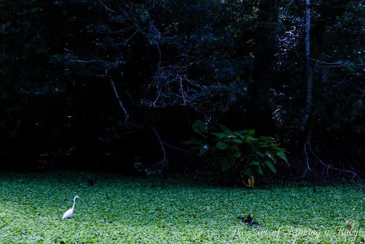 Scavenger Hunt In The Woods – Week 11 Of 52 Weeks Of Experiences