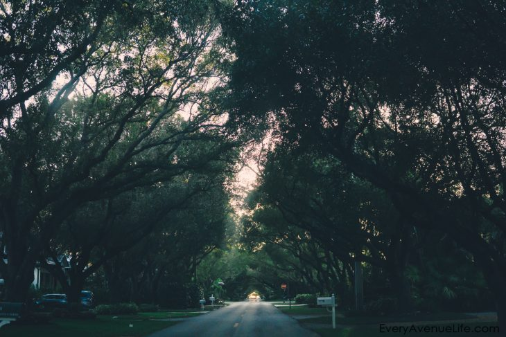 A Walk Down The Streets Of Southwest Florida
